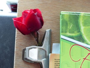 TR_18-Ostanatolien_5_Rose