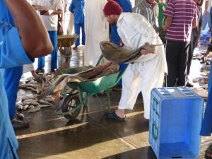 13-UAE_Sharj_Hafen_Fisch schwer