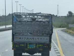 5b_UAE_to Al-Ain_Kameltransport-1
