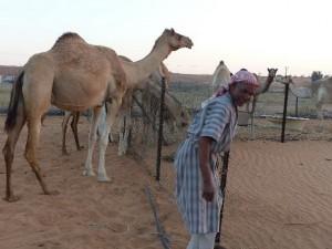69_UAE_hi-AlAin_K-pfleger_Bildgröße ändern