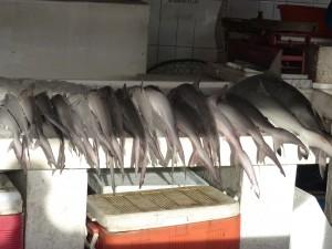 9-UAE_Sharj_Hafen_Fisch-1-grau