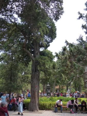 31a-CH_Beij_Kp_Garten_alte-Zypr.