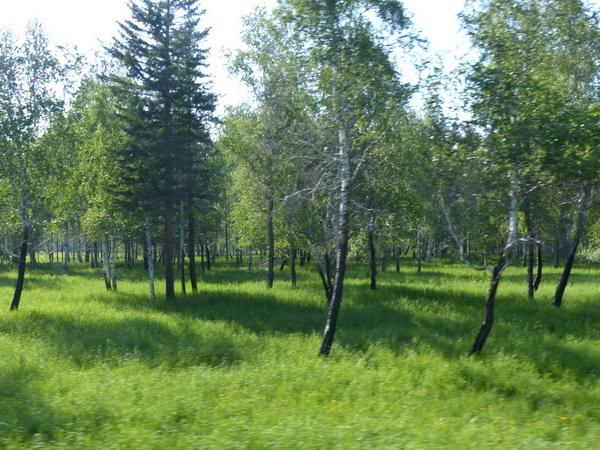 19-RUS_to-Ulan-Ude_Wald-gebr.-grün_!