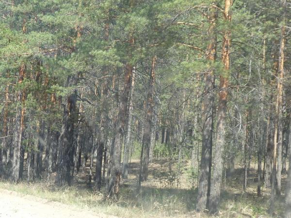 6-RUS_to-Ulan-Ude_Wald-gebrannt