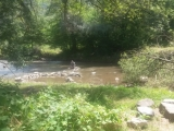 14_AM_18-7-04_Fluss-schön