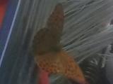 17_AM_18-7-04_Schmetterl.