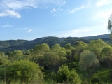 13_TR_18-6-22_Ist-Tosya_Land-Bäume